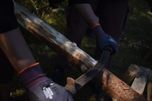 Preparing spruce
